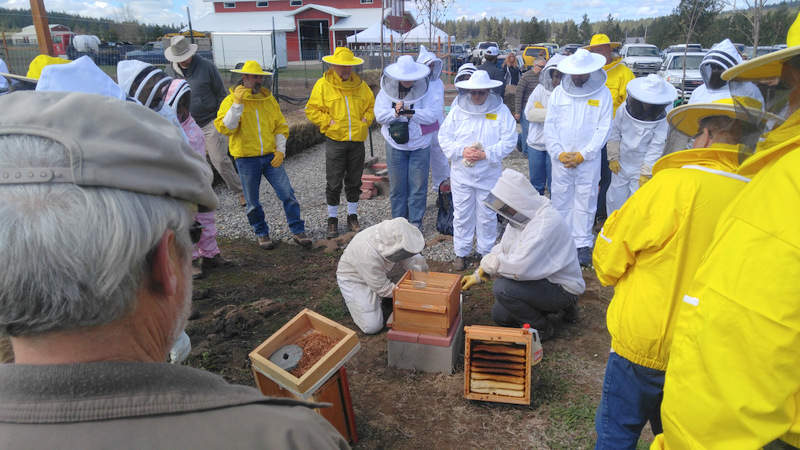 Buying and Installing Live Bees